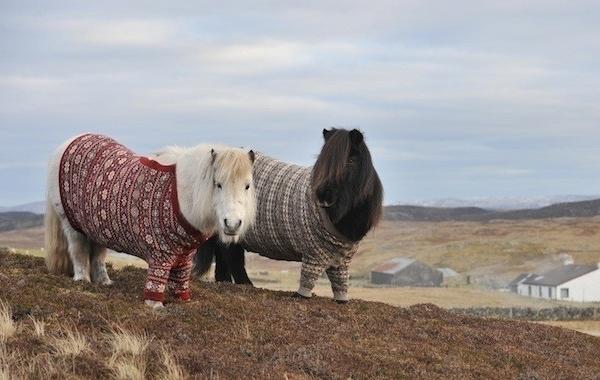 عکسهای بسیار جالب و دیدنی از دنیای حیوانات