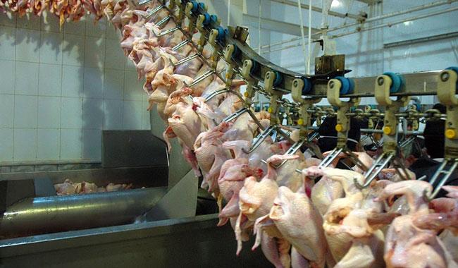 کشتارگاه صنعتی حیوانات در رسانه ها/ تصویری دیده بان حقوق حیوانات- ایران