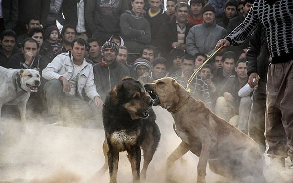 معرفي نژادهاي مختلف سگ سگ های و داستان ارسالی ميثم يه طوله سگ