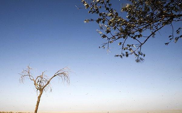 عکس حیوان عجیب در دریاچه ارومیه