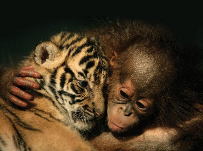 دانلود+عکس+حیوانات+وحشی