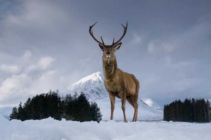 عکاسی حیات وحش بریتانیا 2014