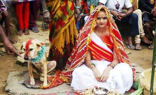 ازدواج دختر جوان با سگ ولگرد
