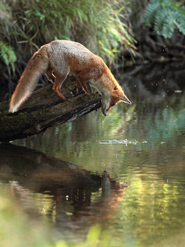 عکس های عجیب و دیدنی از دنیای حیوانات