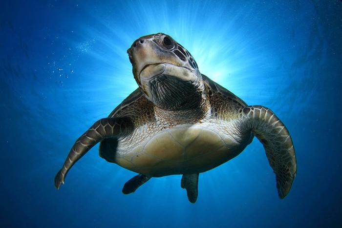 عکس های زیبا و دیدنی از دنیای حیوانات