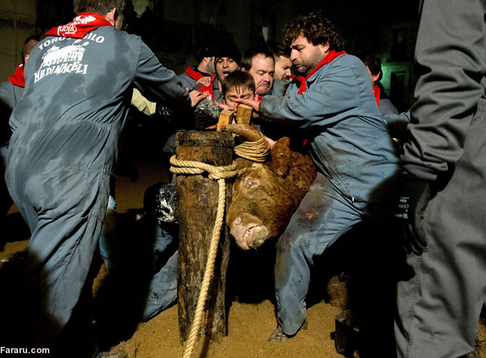 (تصاویر) حیوانآزاری در فستیوال