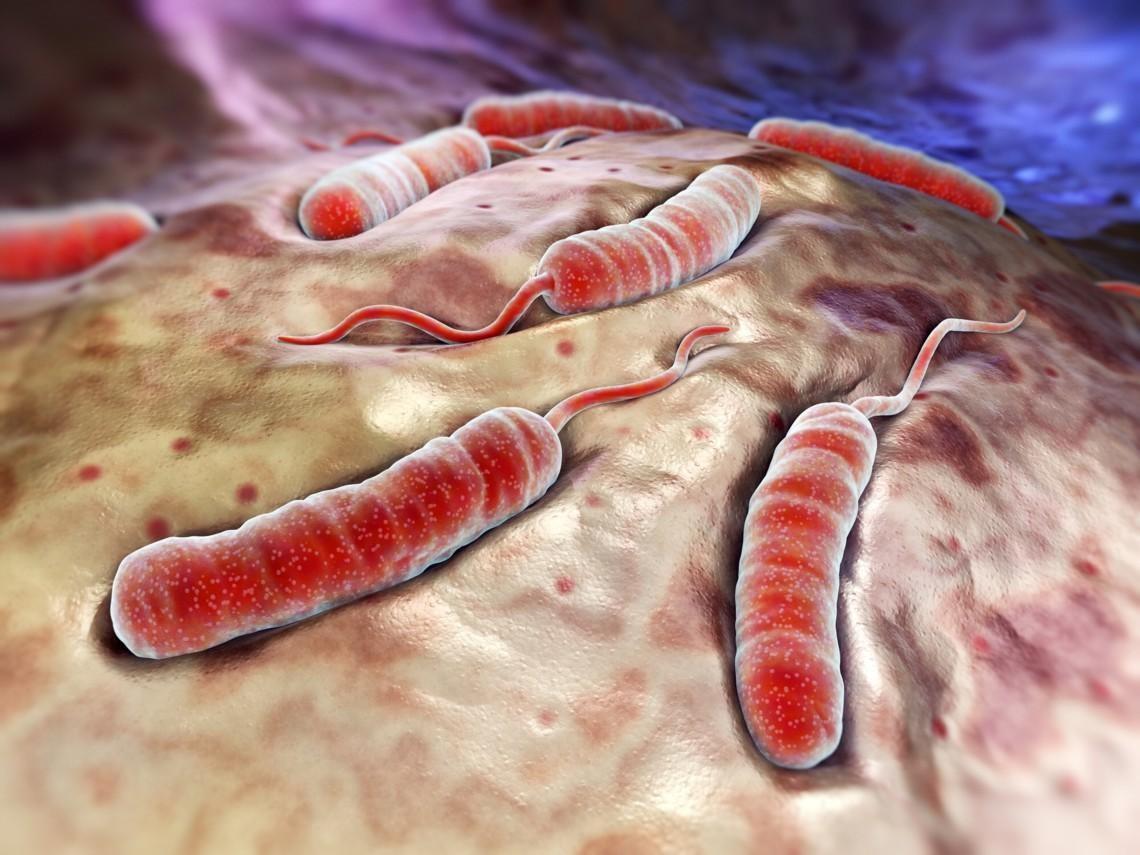 651792 837 - از طاعون تا وبا؛ با مرگبارترین سلاحهای بیولوژیک تاریخ آشنا شوید