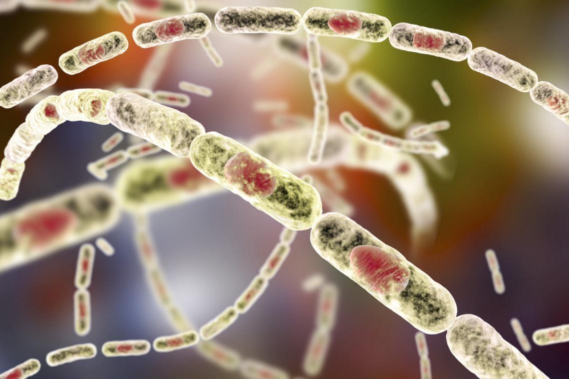 651793 480 - از طاعون تا وبا؛ با مرگبارترین سلاحهای بیولوژیک تاریخ آشنا شوید