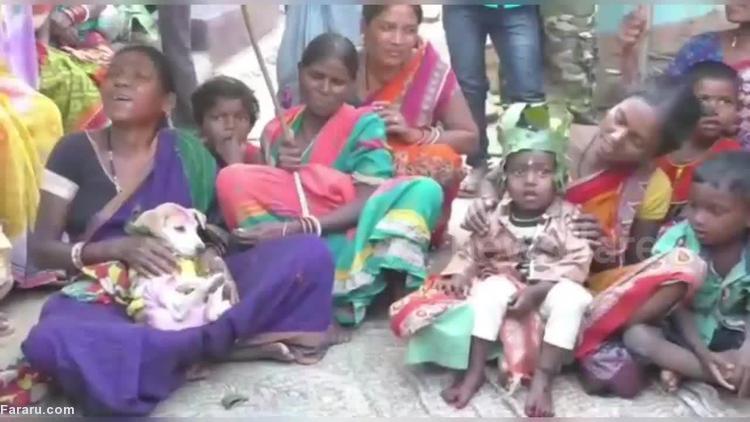 (ویدئو) رسم عجیب یک قبیله؛ ازدواج کودکان با سگ!
