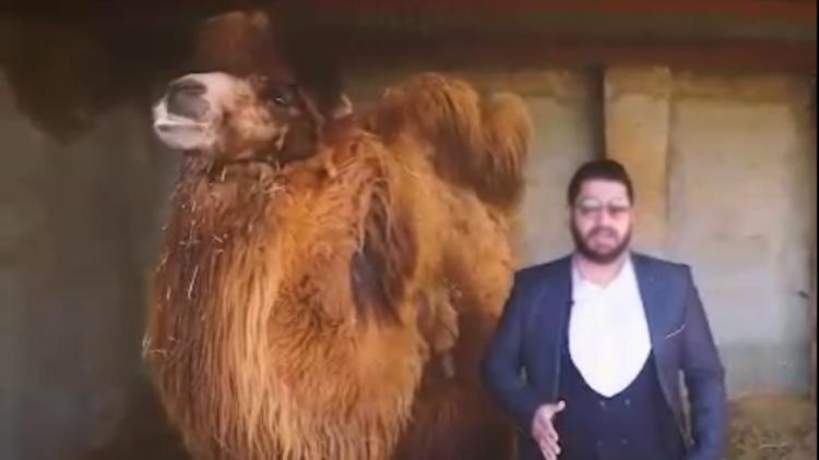 شیاد مدعی درمان کرونا با ادرار شتر بازداشت شد