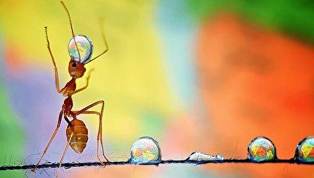 مورچهها و قطرات آب؛ تصاویر باورنکردنی گرفته شده با موبایل