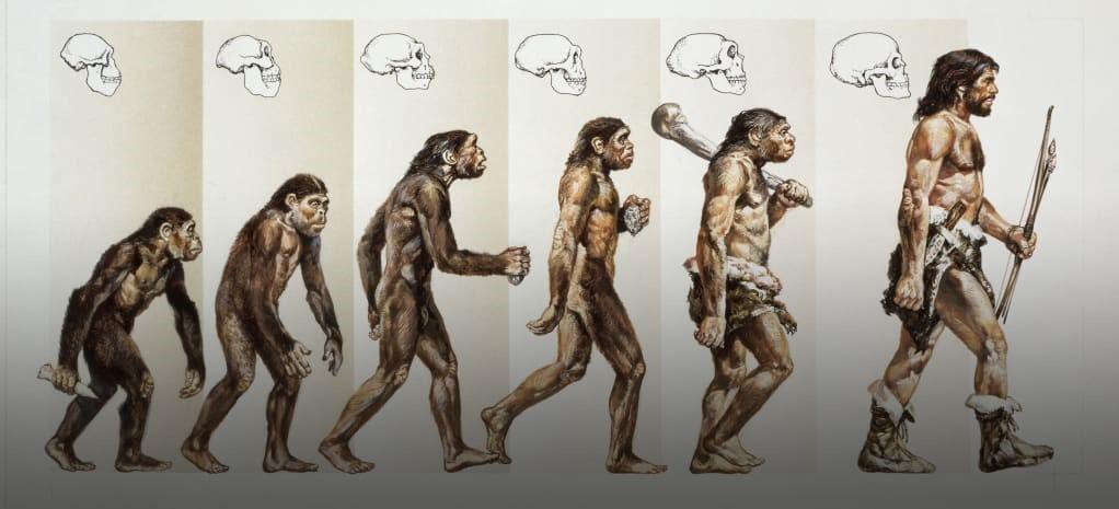 تکامل به زبان ساده. داروین چه میگوید؟