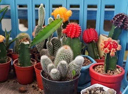 انواع گل کاکتوس و روش نگهداری و تکثیر کاکتوس در خانه