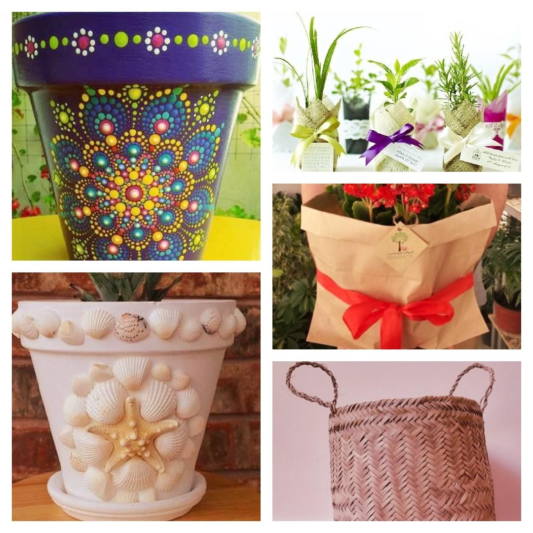 ده نمونه از بهترین گیاهانی که برای هدیه دادن مناسب هستند!