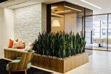 ۱۰ گیاه آپارتمانی مجلل و زیبا، برای آپارتمانهای لوکس و مدرن
