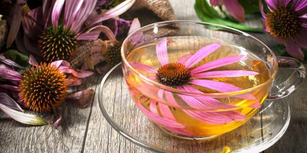 با مصرف این گیاهان دارویی، به سلامت از پاییز گذر کنید!