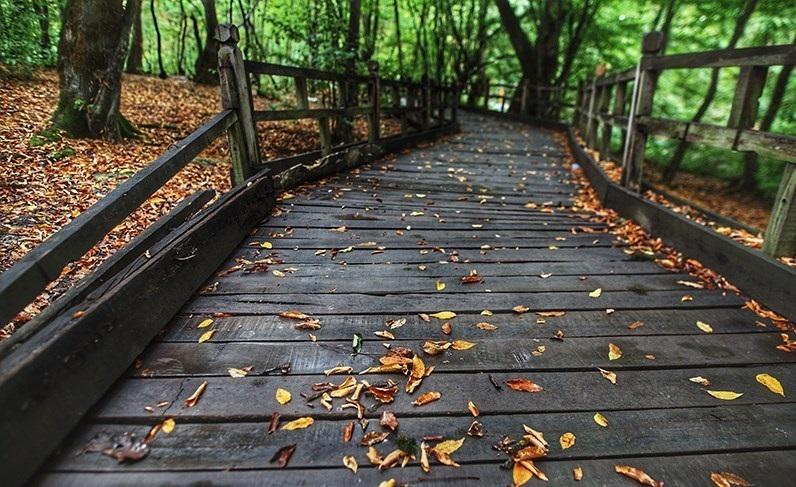 تصاویری دلنشین از باران پاییزی در پارک جنگلی النگدره