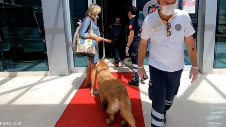 (ویدئو) سگی که تا بیمارستان دنبال صاحبش دوید