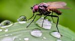 مگس روی قطرات باران روی ساقه گیاه؛ بورگدورف، آلمان. (Stratenschulte/European PressPhoto Agency)