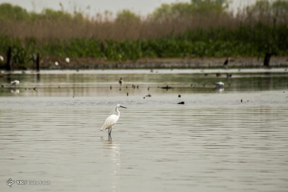 resized 904024 699 - مرگ تدریجی تالاب انزلی؛ از بزرگترین زیستگاههای طبیعی ایران
