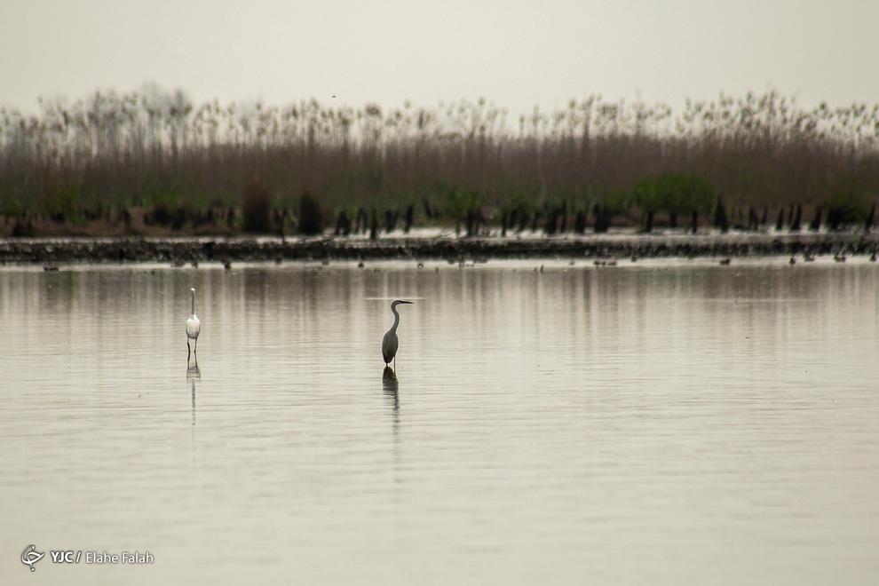 resized 904025 410 - مرگ تدریجی تالاب انزلی؛ از بزرگترین زیستگاههای طبیعی ایران