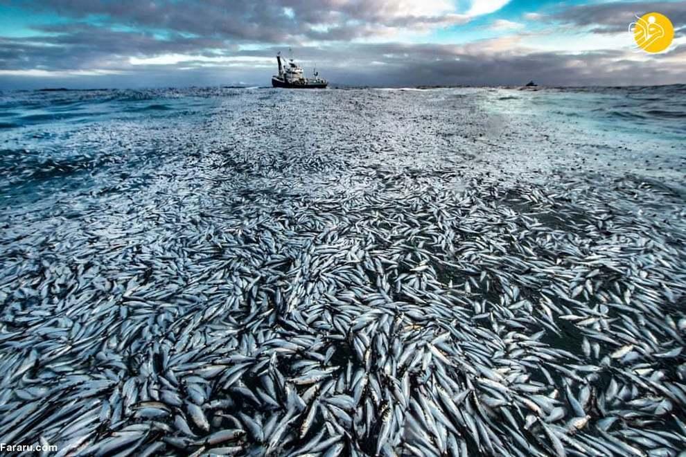 انتشار زیباترین عکسهای مسابقه عکاسی حیات وحش ۲۰۲۱