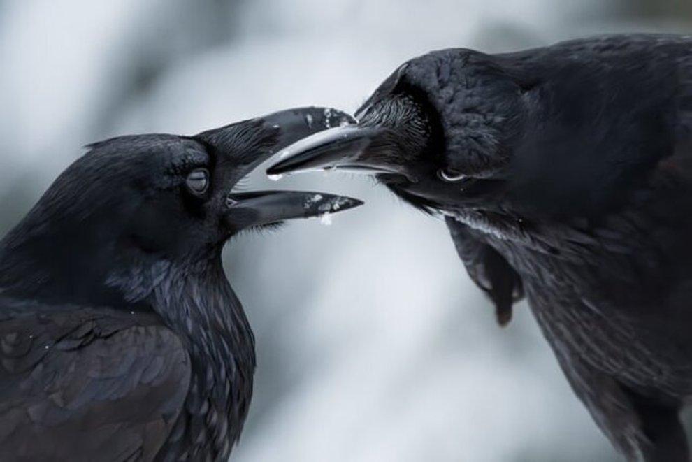 «صمیمانه» اثر «شین کالین» / برنده بخش رفتار پرندگان