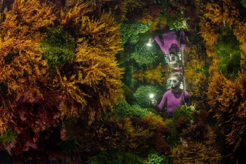 «بازتاب» اثر «جاستین گیلیگن» / برنده بخش گیاهان