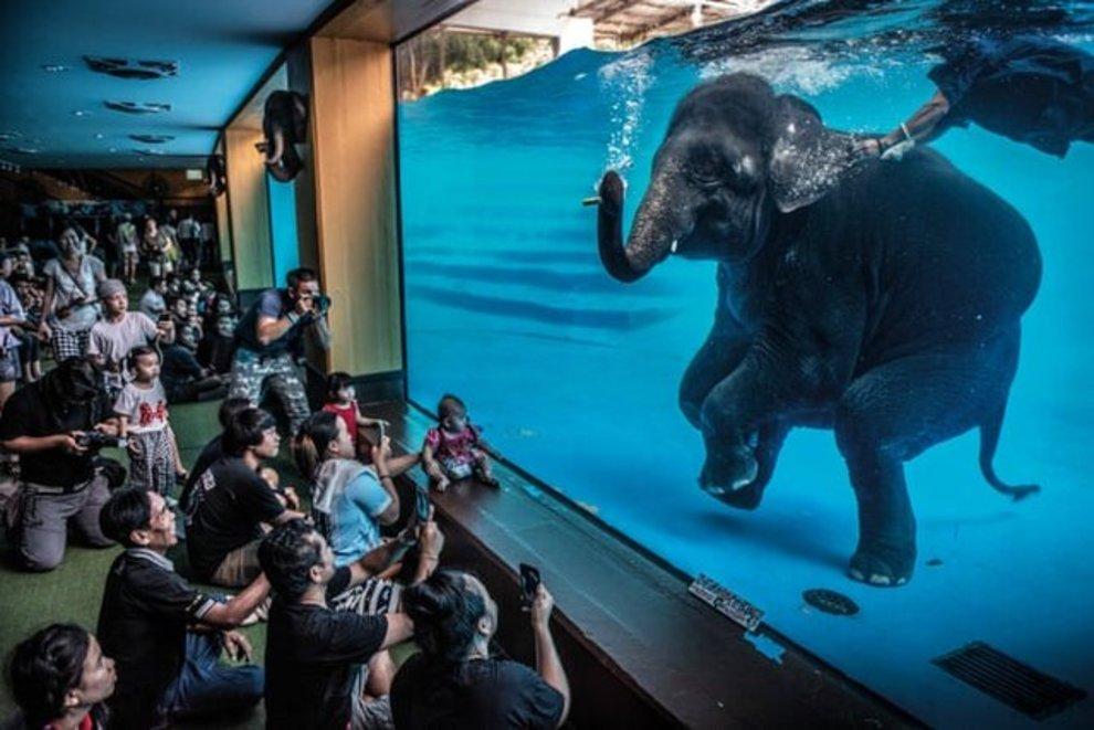 «فیل در اتاق» اثر «آدام آسول» / برنده بخش عکس خبری