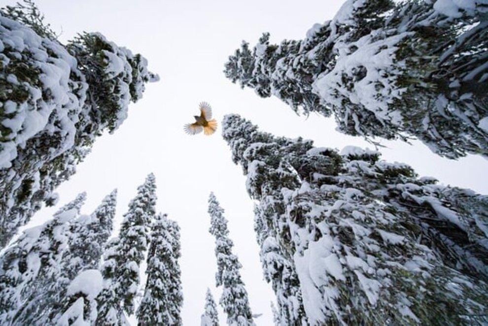 «پرندهای بر فراز آسمان» اثر «لاسا کورکلا» / برنده بخش عکاسهای بین ۱۵ تا ۱۷ سال